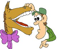 Idiom Definition - look a gift horse in the mouth