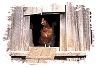 Idiom Definition - come home to roost